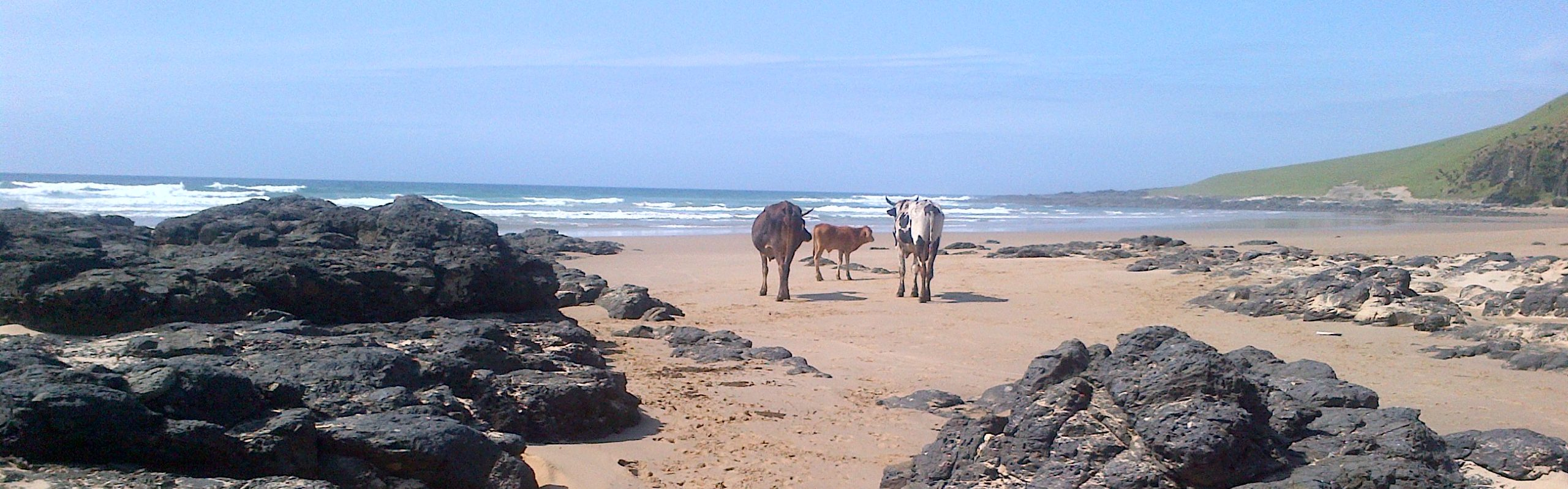 Transkei WildCoast